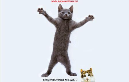 Пощекоти котенка мышкой ;)