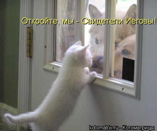Свежие котоматрицы (80 картинок)