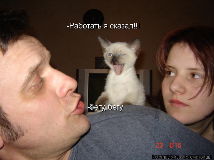 Свежие котоматрицы