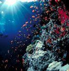 Самый красивый коралловый риф
