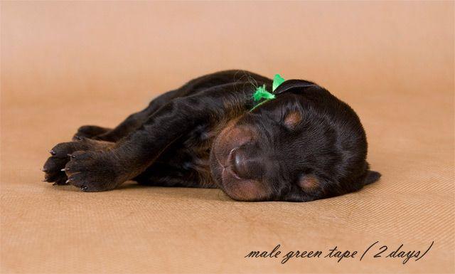 Позитив дня! Забавные щенки (88 фото)