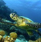 Куда торопится черепаха