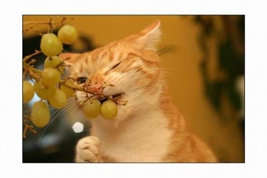 Немного позитивных котят (41 фото)