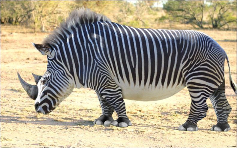 Невероятные животные (49 фото)