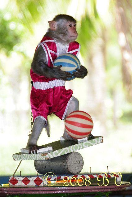 Классная обезьянка (8 фото)