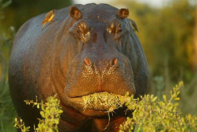 Красивые фотографии животных и природы (36 штук)