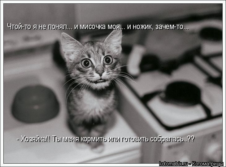 Свежие котоматрицы (86 картинок)