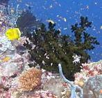 Легка ли жизнь у коралла?