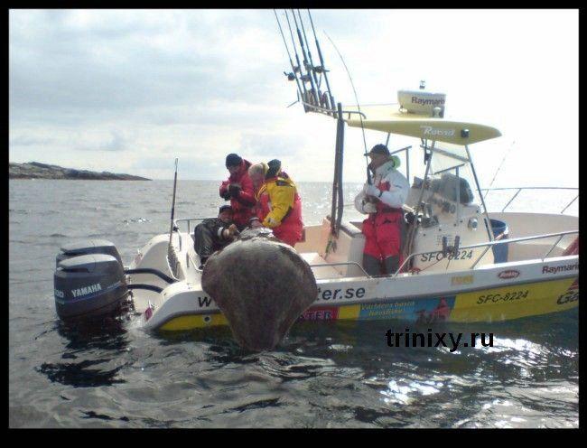 Гигантский улов (3 фото)