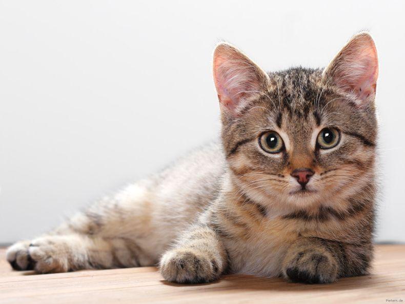 Позитив с животными на понедельник. Кошки (63 фото)