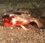 Живут ли летучие мыши в море