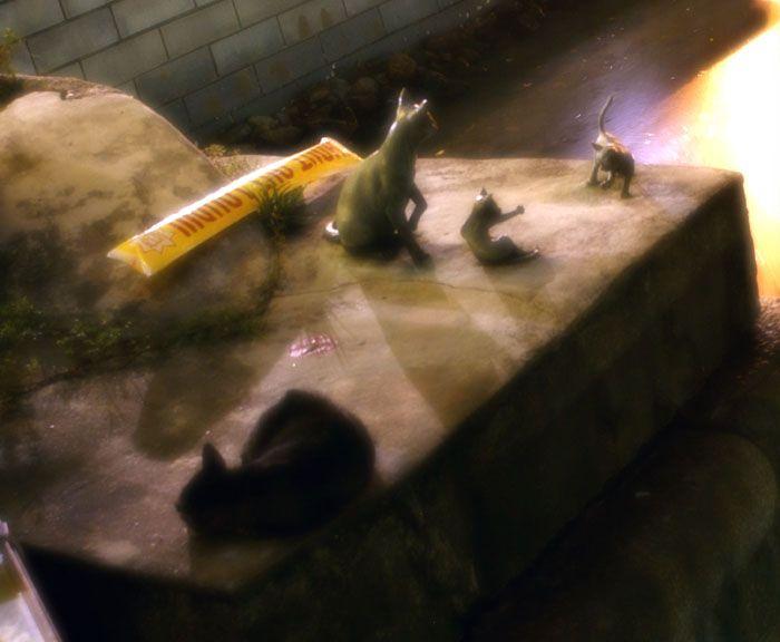 Котопамятники (57 фото)