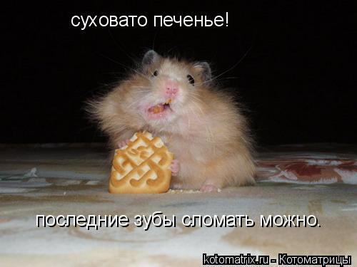 Фото - самые - Самый смешной хомяк в мире.
