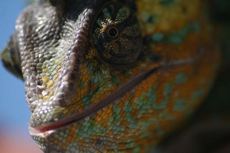 Гламурное животное (7 фото)