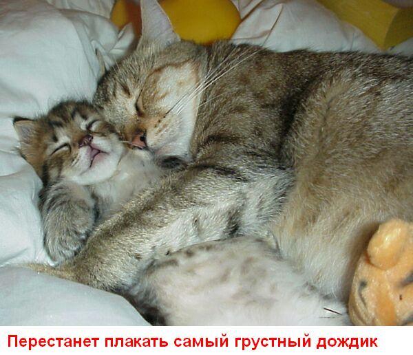 Улыбнись (15 картинок)