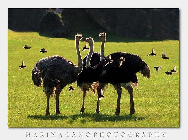Потрясающие фотографии Африки от Marina Cano (71 штука)