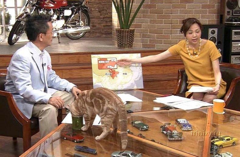 Кот в прямом эфире (4 фото)