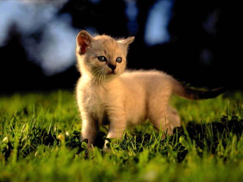 Вся правда о кошках (20 фото)