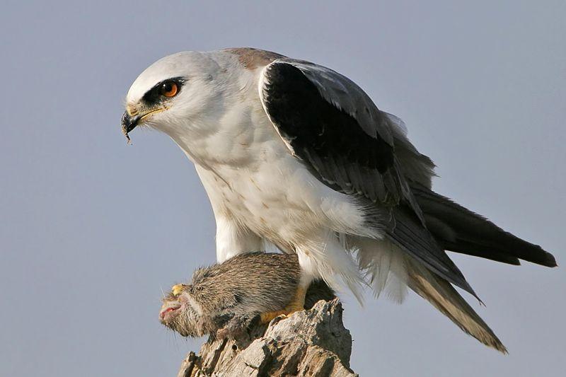 Красивые фотографии птиц (34 фото).