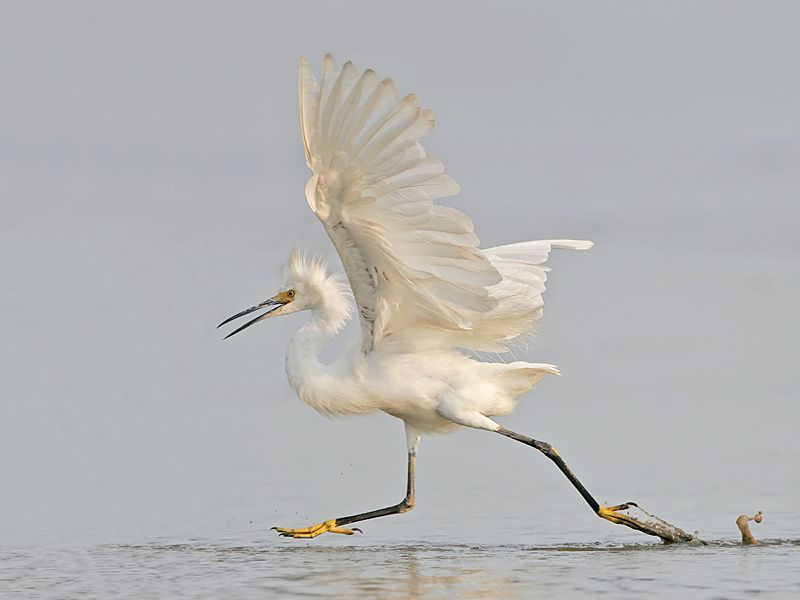http://de.trinixy.ru/pics3/20080617/birds_06.jpg