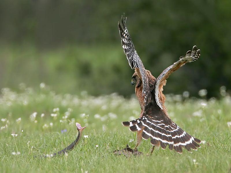 http://de.trinixy.ru/pics3/20080617/birds_11.jpg