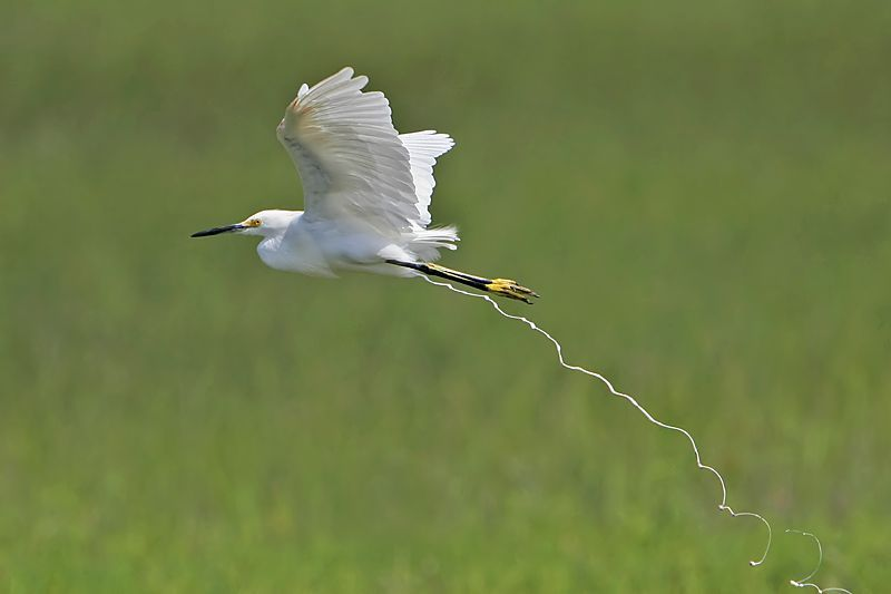 http://de.trinixy.ru/pics3/20080617/birds_17.jpg