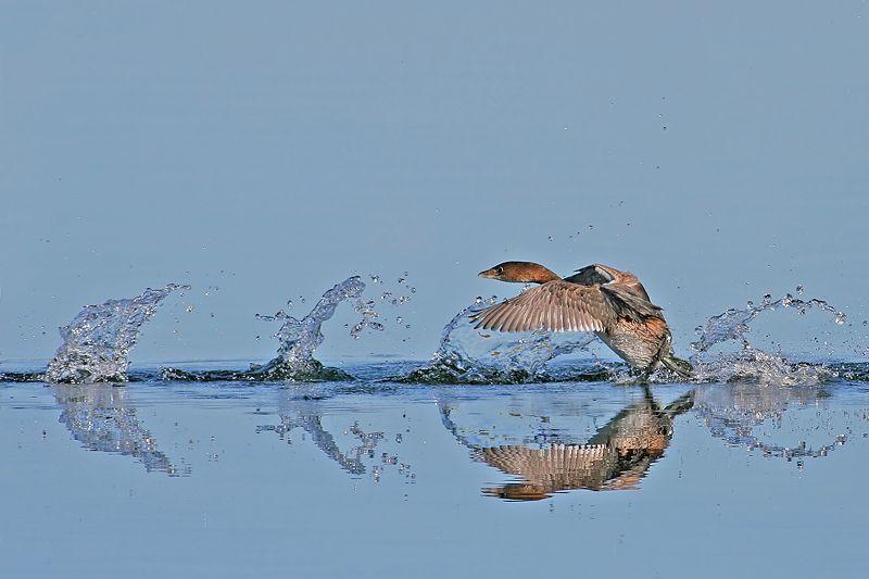 http://de.trinixy.ru/pics3/20080617/birds_18.jpg