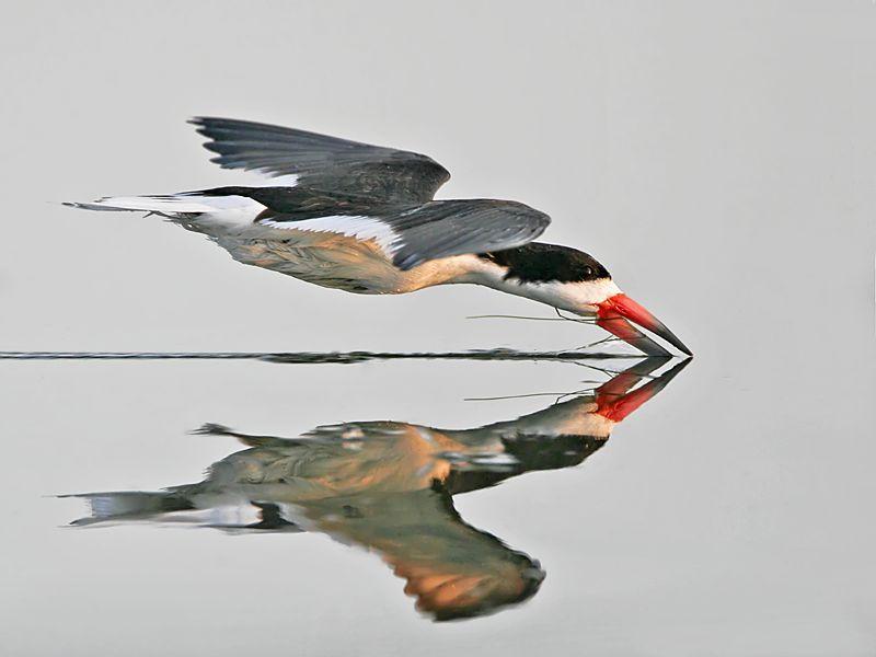 Потрясающие фотографии птиц (29 фото)