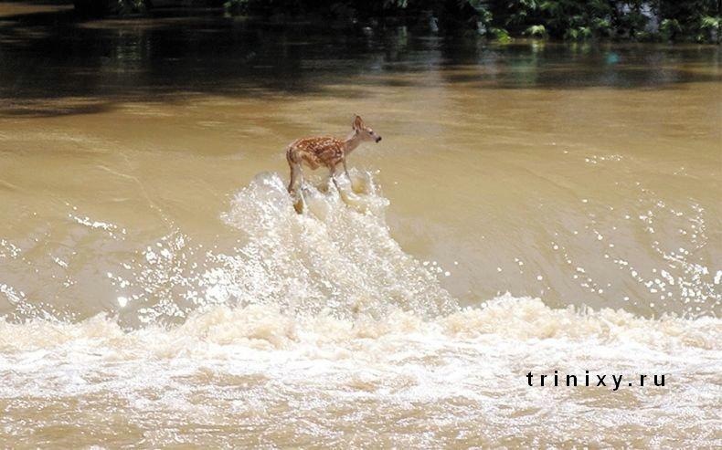 Вода, вода, кругом вода (17 фото)