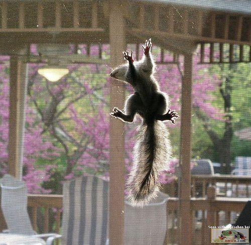 Большая подборка забавных животных (108 Фото)
