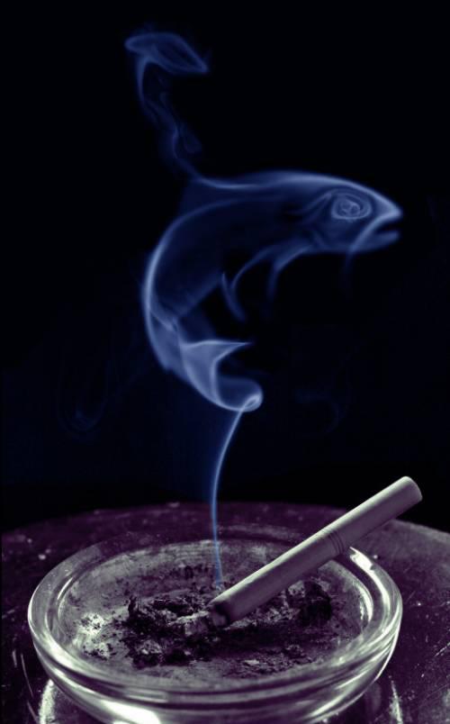 Очень красивые фотографии дыма (15 фото)