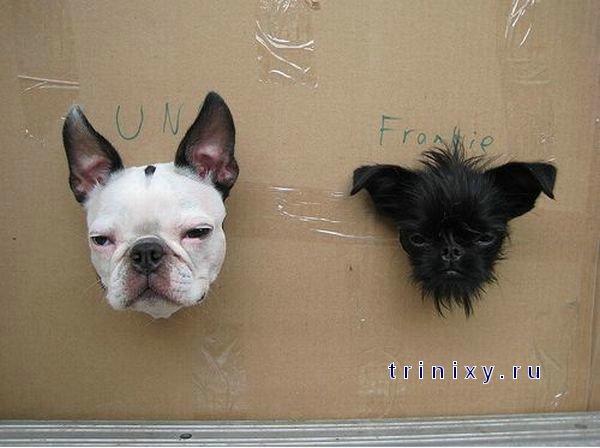 Прикольная собачья фотосессия (6 фото)