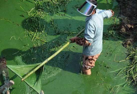 Зеленое озеро в Китае (9 фото)