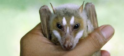 Топ-10 самых необычных живых существ на Земле (10 фото + текст)