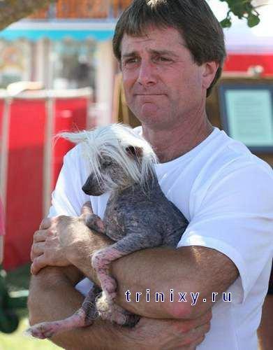 Самая уродливая собака - 2008 (37 фото)