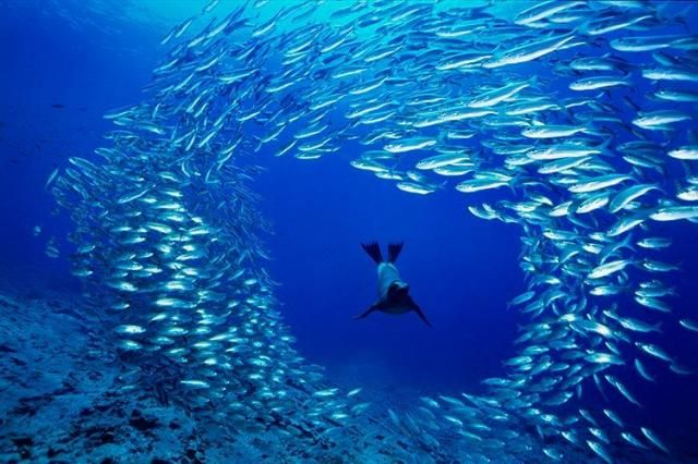 Очень красивые фотографии подводного мира (105 штук)