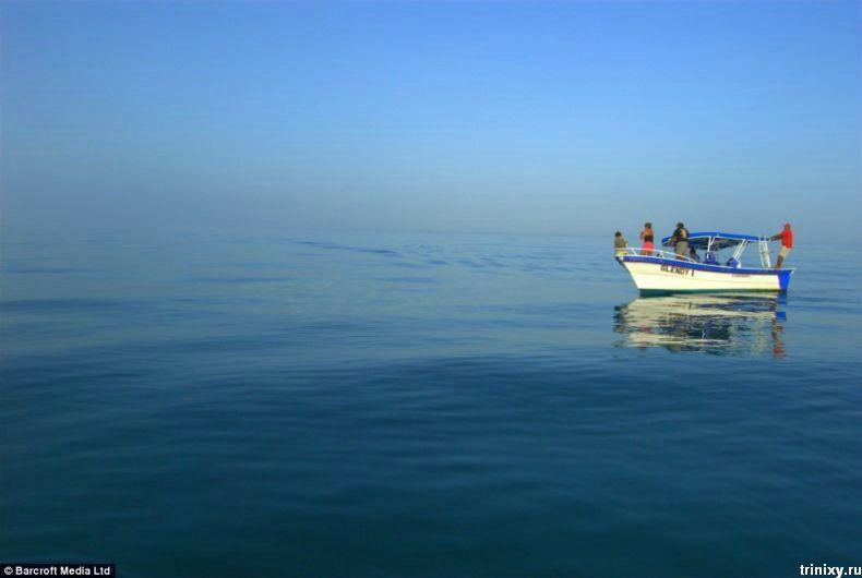 скаты около лодки