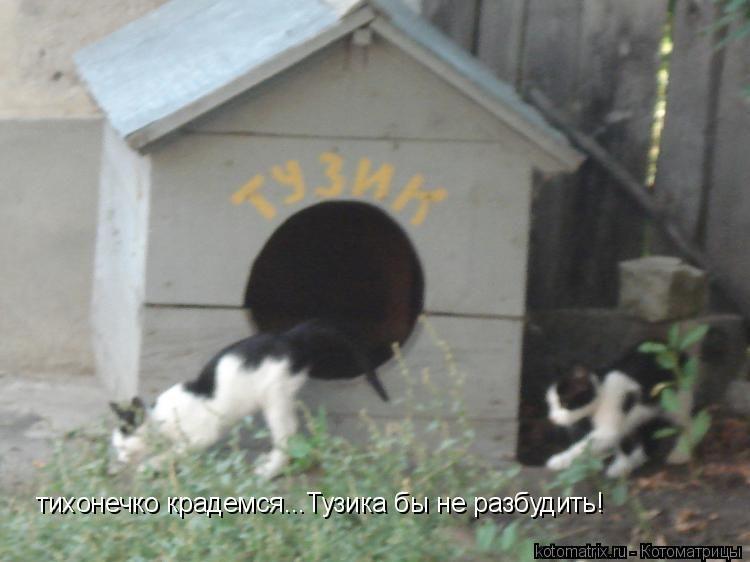 Лучшие котоматрицы недели (106 картинок)