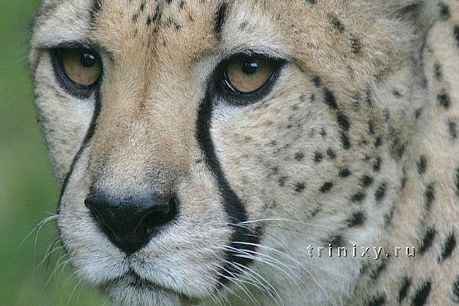 Из жизни животного мира (54 штуки)