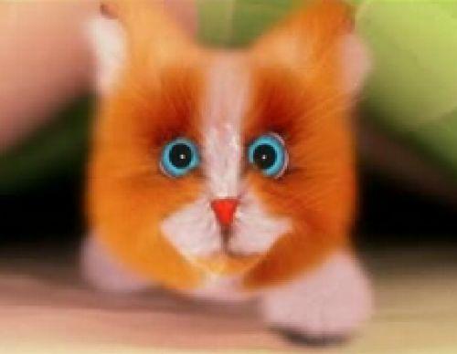 Песенка котенка