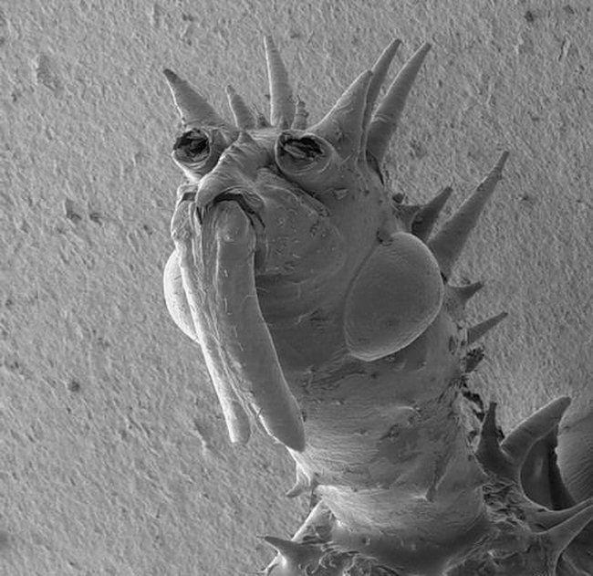 Твари под микроскопом (12 фото)