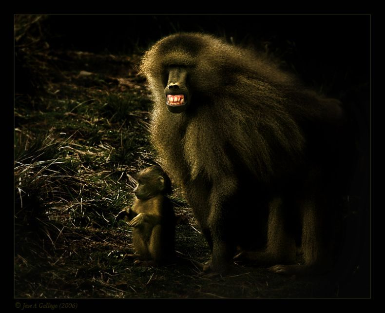 Животные и природа от Jose A Gallego (62 фото)