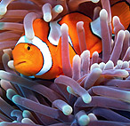 Подводные съемки красного моря