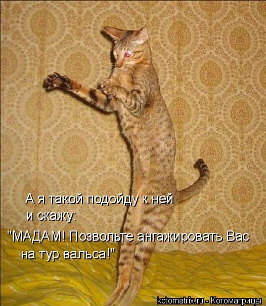 Лучшие котоматрицы июня (50 штук)