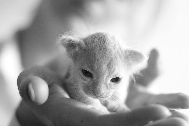 Позитив дня! Уматовые котята (6 фото)