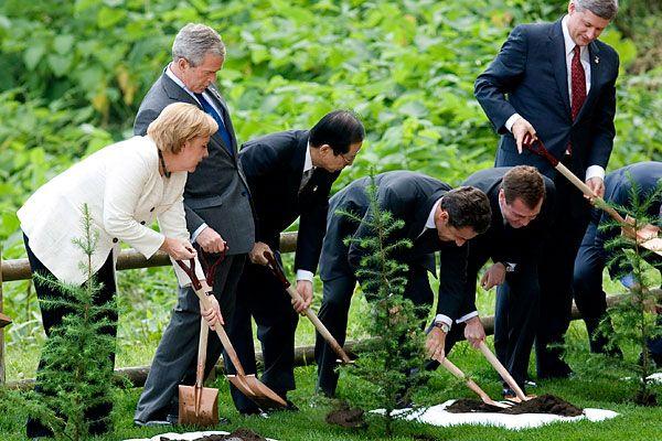 Политики садят японские ели (12 фото)