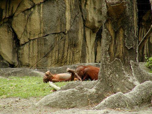 Почему нельзя водить детей в зоопарк (10 фото)
