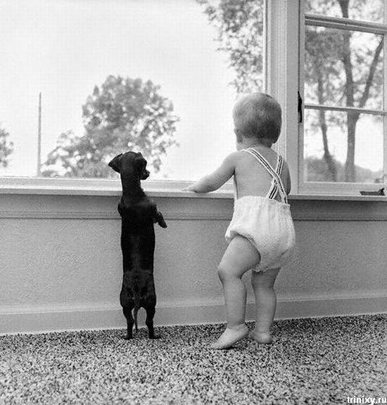 Дети и животные ...