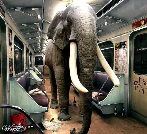 Найди слона (89 фото)