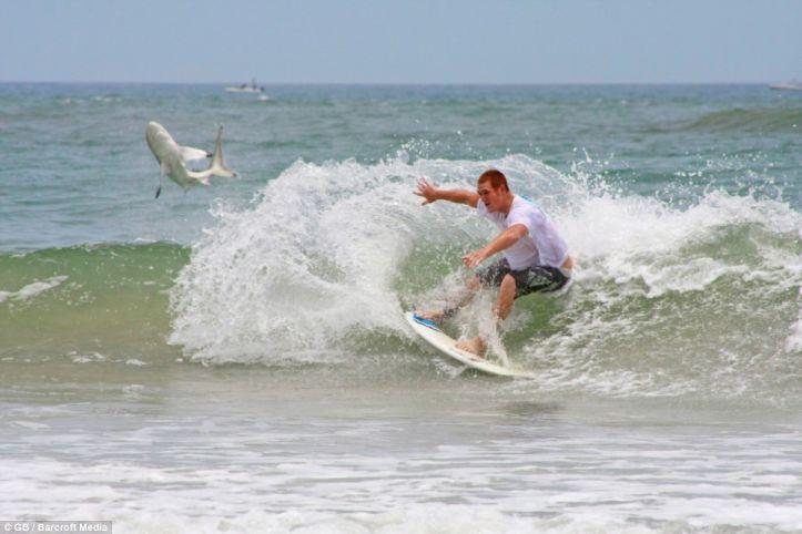 Опасности серфинга (3 фото)